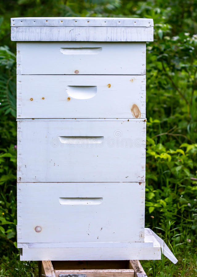 Basic Bee Hive stock photography