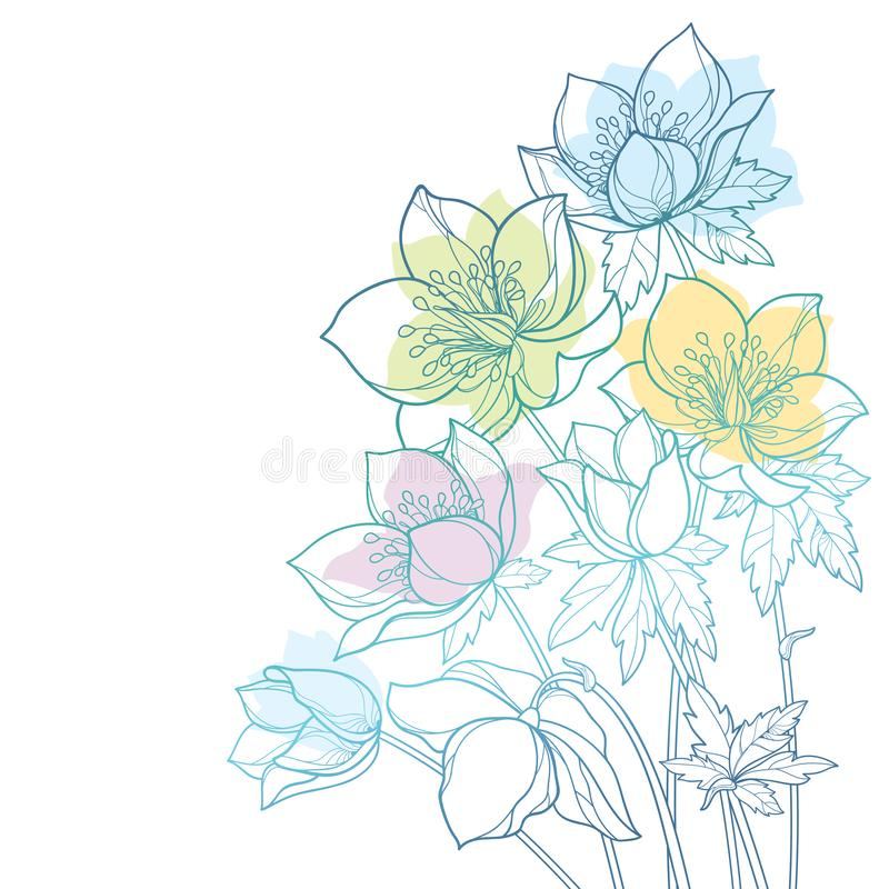 Vector corner bouquet with outline Hellebore or Helleborus or Winter rose, bud and leaf in pastel green and blue isolated. vector illustration