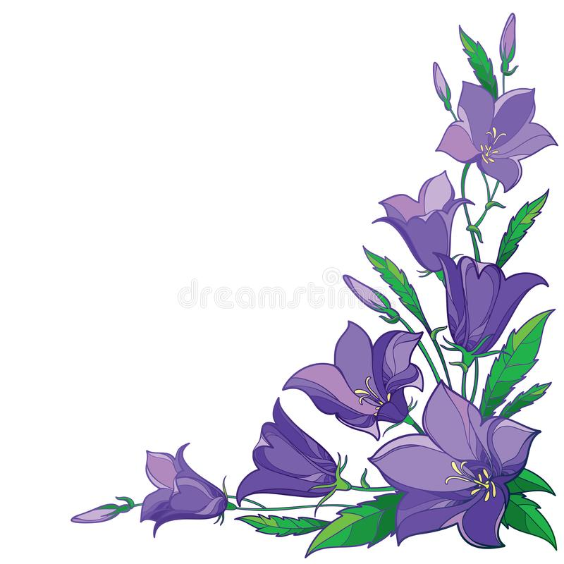 Vector corner bouquet with outline Campanula or Bellflower or Bluebell flower in pastel violet, leaf and bud isolated on white. Vector corner bouquet with stock illustration