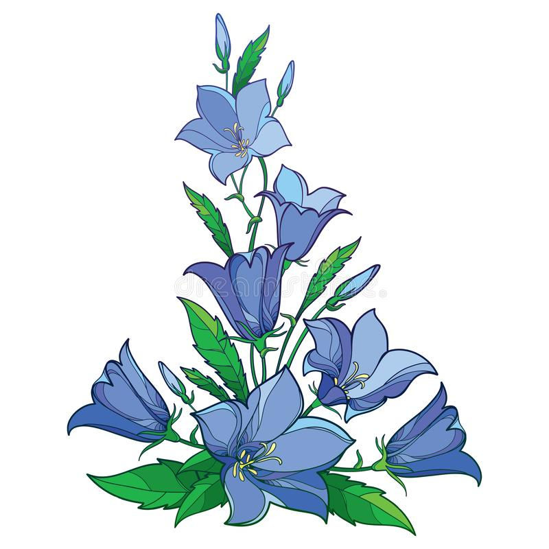 Vector bouquet with outline Campanula or Bellflower or Bluebell flower in pastel blue, green leaf and bud isolated on white. Vector bouquet with outline royalty free illustration