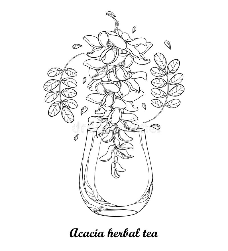 Vector drawing of cup of false Acacia or black Locust or Robinia herbal tea with leaves and flower in black isolated on white. Vector drawing of cup of false royalty free illustration