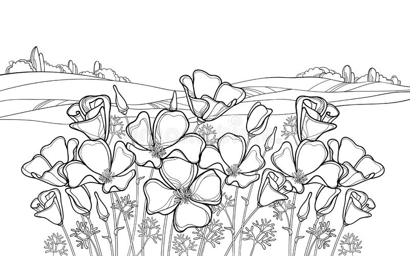 Vector outline California poppy flower or Eschscholzia, leaf and bud in black on the white background with field and sky. Ornate landscape with contour poppy vector illustration