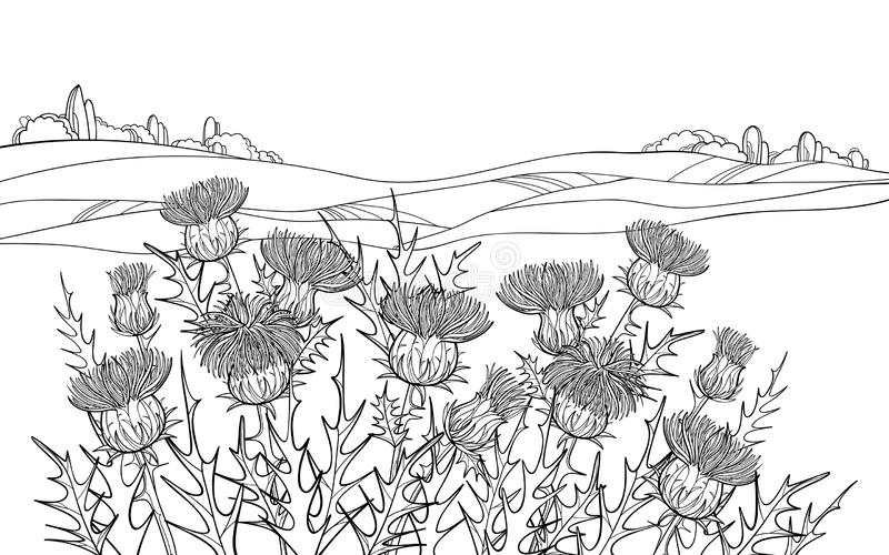 Vector thickets of outline Thistle or Carduus plant, spiny leaf, bud and flower in black on the white background with field. Vector thickets of outline Thistle royalty free illustration