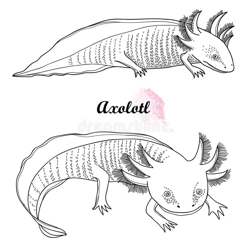 Vector set of outline Mexican axolotl or walking fish in black isolated on white background. Vertebrate animal amphibian. royalty free illustration