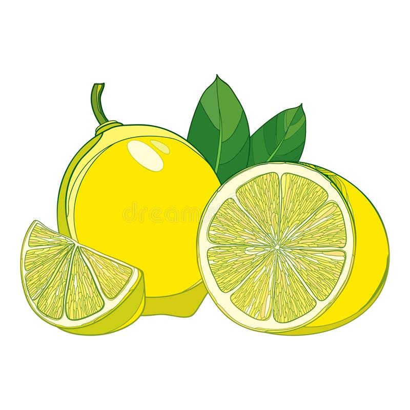 Vector outline yellow ripe Lemon slice and whole fruit with green leaf isolated on white background. Composition with lemon. royalty free illustration