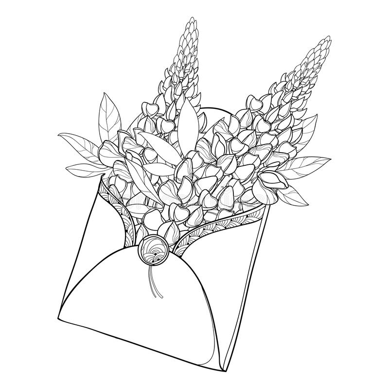Vector bouquet of outline Lupin or Lupine flower bunch, bud and ornate leaves in open craft envelope in black isolated on white. royalty free illustration