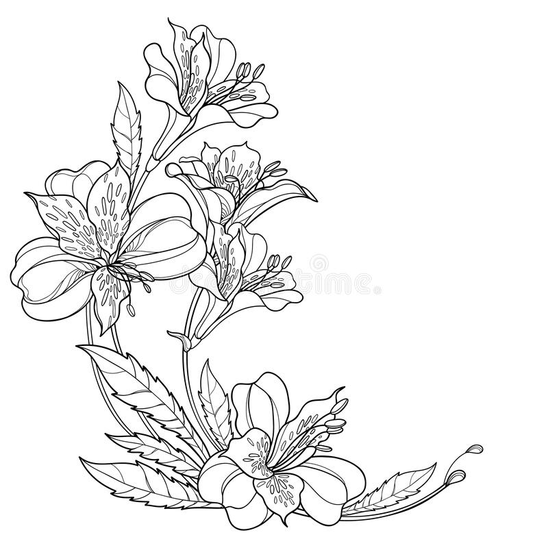 Lily Bunch Stock Illustrations 2 307 Lily Bunch Stock Illustrations Vectors Clipart Dreamstime