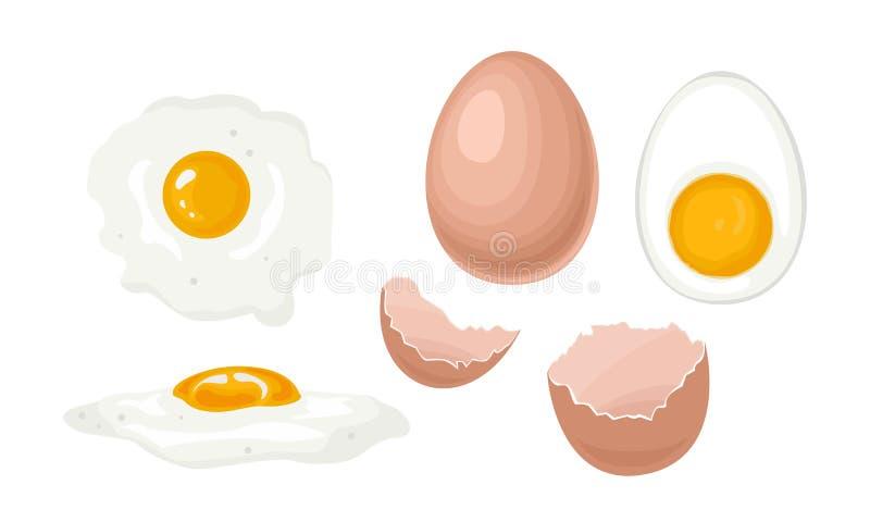 Chicken eggs set. Whole chicken egg in brown shell, half boiled egg with yolk, fried egg, broken egg shell. vector illustration
