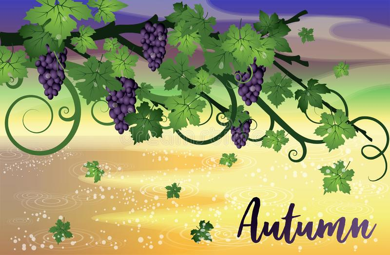 Autumn invitation wallpaper with grapes, vector. Illustration stock illustration