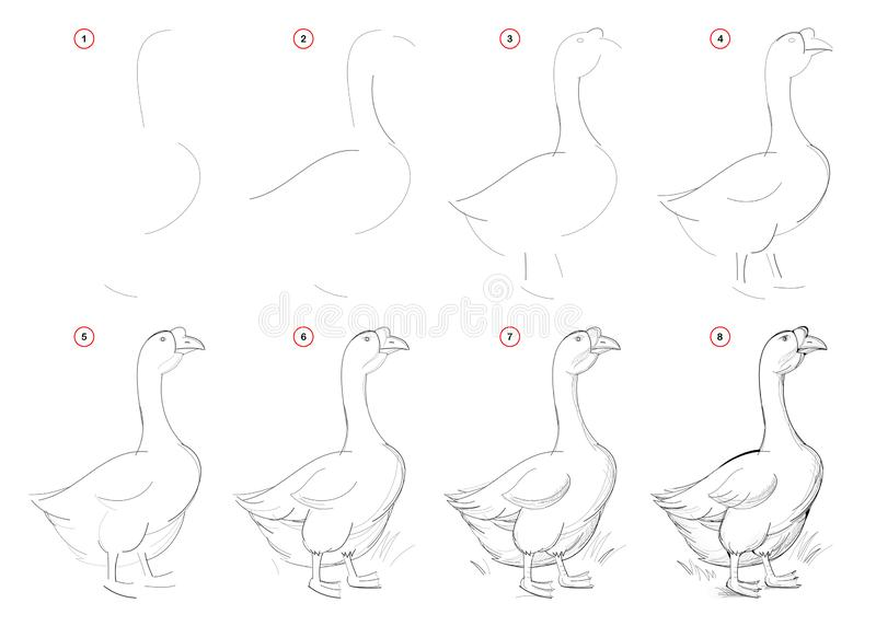 How to draw from nature step by step sketch of goose on farm. Creation step-wise pencil drawing. Educational page for artists. vector illustration