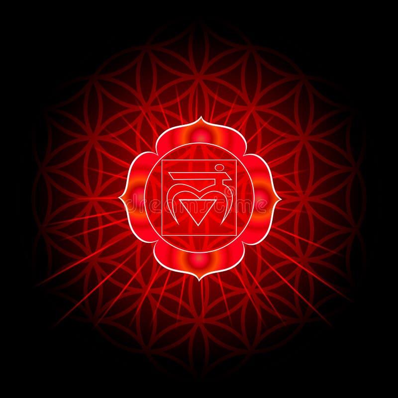 Circle mandala pattern. Muladhara chakra. vector illustration