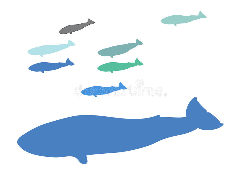 Group of Whales royalty free stock image