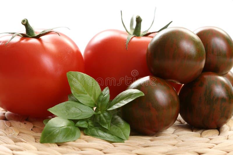 basilów pomidorów zdjęcia stock