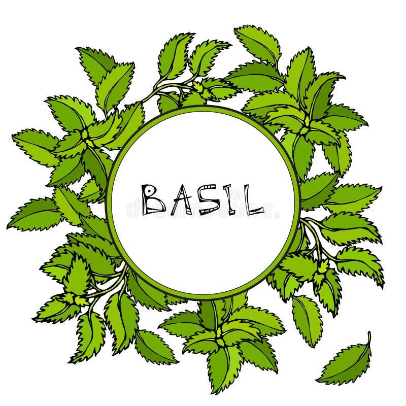 Basil Background e quadro verdes frescos Erva de cozimento aromática Especiaria da carne do bife Ilustração desenhada mão Estilo  ilustração stock