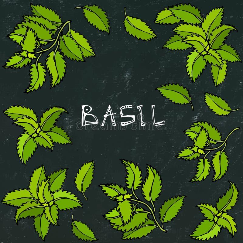 Basil Background e quadro verdes frescos Erva de cozimento aromática Especiaria da carne do bife Ilustração desenhada mão Estilo  ilustração do vetor
