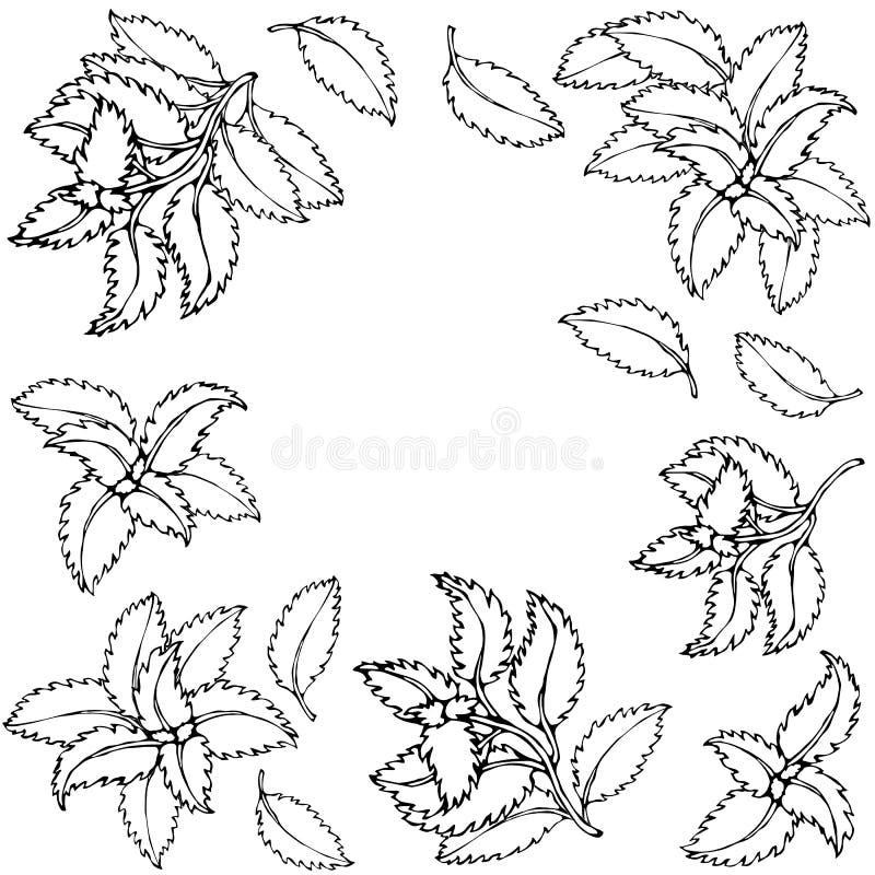 Basil Background e quadro verdes frescos Erva de cozimento aromática Especiaria da carne do bife Ilustração desenhada mão Doodle  ilustração do vetor