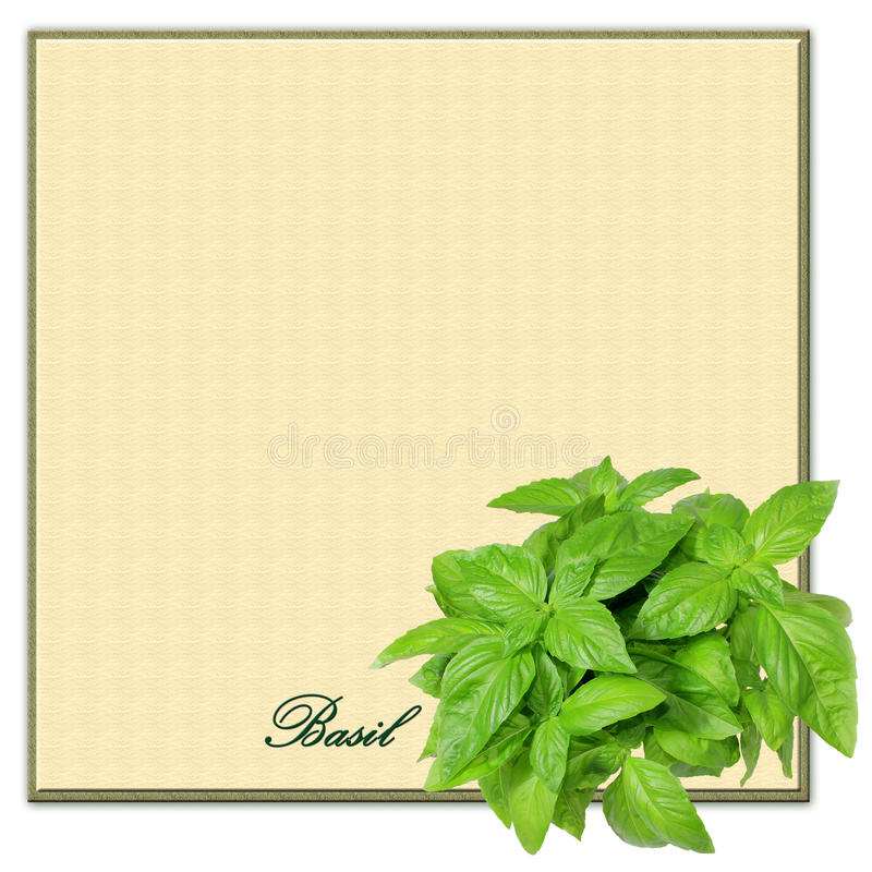 Download Basil Border Square Copyspace Stock Image - Image of herbal, organic: 18090939