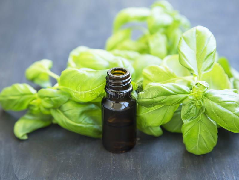 Basil Essential Oil in una bottiglia con Basil Herb Leaves fotografie stock libere da diritti