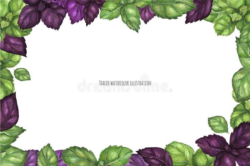 Basil Frame verde e roxo fresco ilustração stock