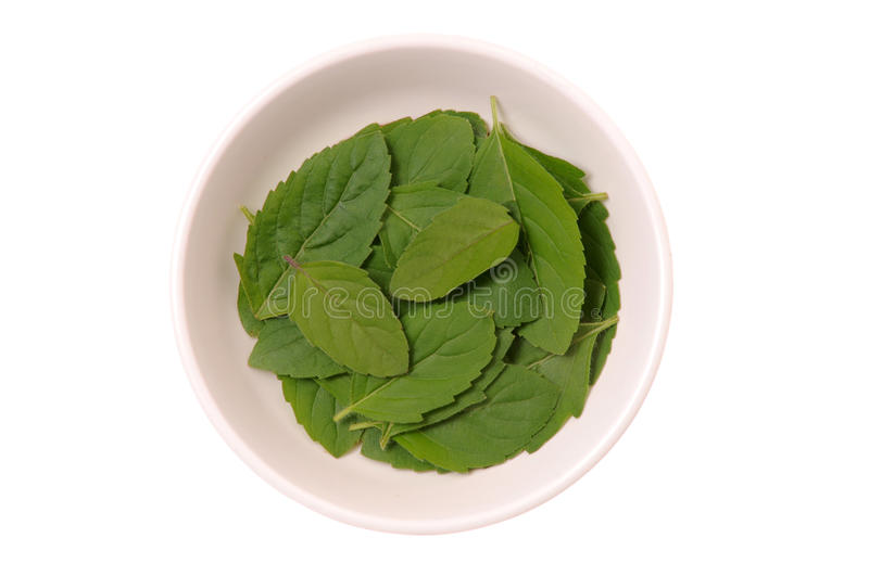 Basil fresh leaves royalty free stock photography