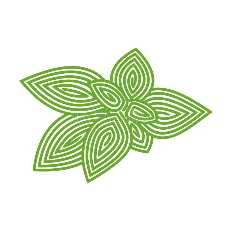 Basil herb vector illustration