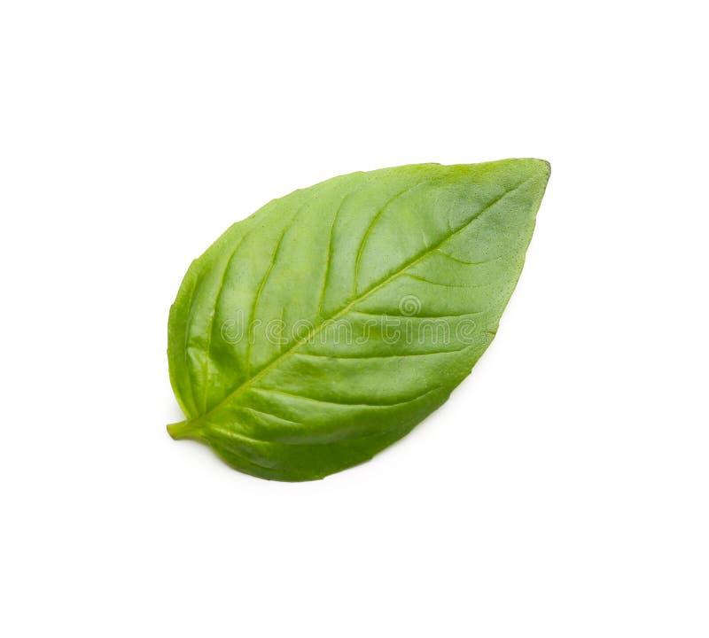 Basil Leaf On White Background fresco fotografia stock