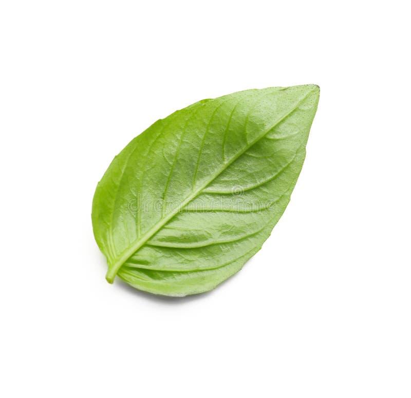 Basil Leaf On White Background fresco fotografie stock