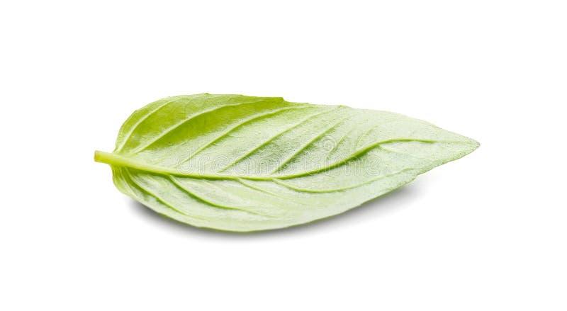 Basil Leaf On White Background fresco fotografia stock libera da diritti