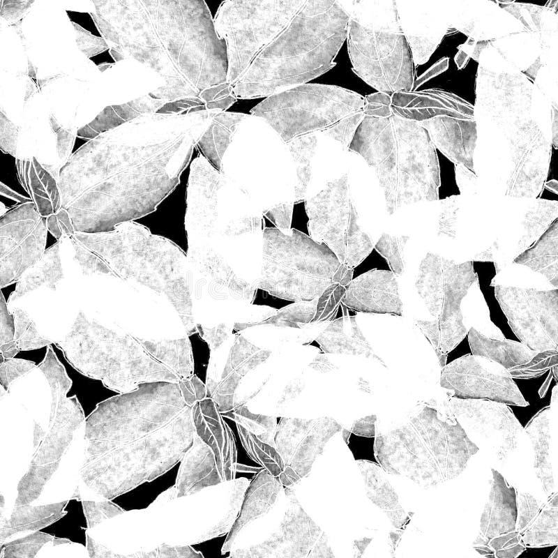 Basil Leafs Seamless Pattern Fondo disegnato a mano di Repeatably con l'erba ed il basilico della spezia fotografia stock libera da diritti