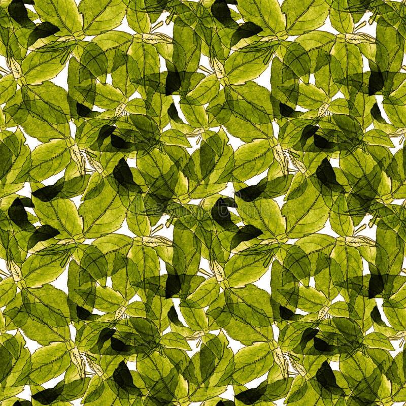 Basil Leafs Seamless Pattern Fondo disegnato a mano di Repeatably con l'erba ed il basilico della spezia fotografie stock