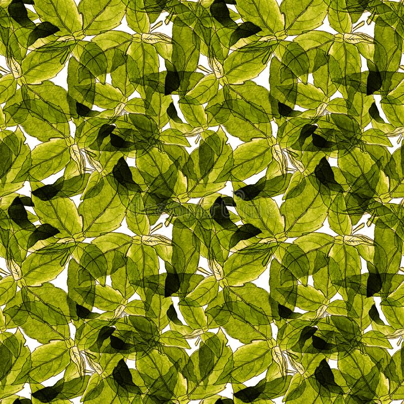 Basil Leafs Seamless Pattern Fundo tirado mão de Repeatably com erva e manjericão da especiaria fotos de stock