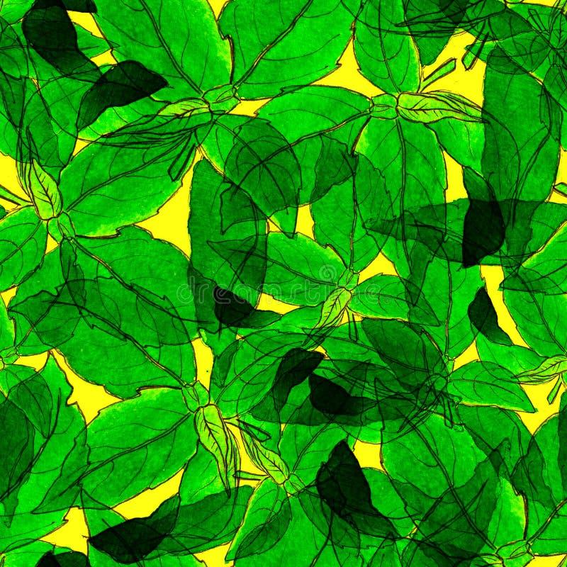 Basil Leafs Seamless Pattern Fundo tirado mão de Repeatably com erva e manjericão da especiaria ilustração do vetor