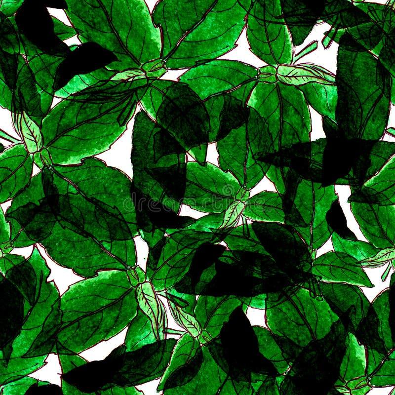 Basil Leafs Seamless Pattern Fundo tirado mão de Repeatably com erva e manjericão da especiaria ilustração stock