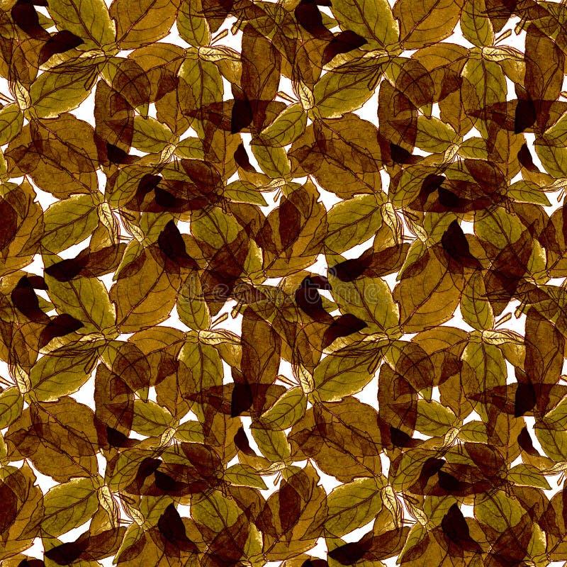 Basil Leafs Seamless Pattern Fundo tirado mão de Repeatably com erva e manjericão da especiaria ilustração royalty free