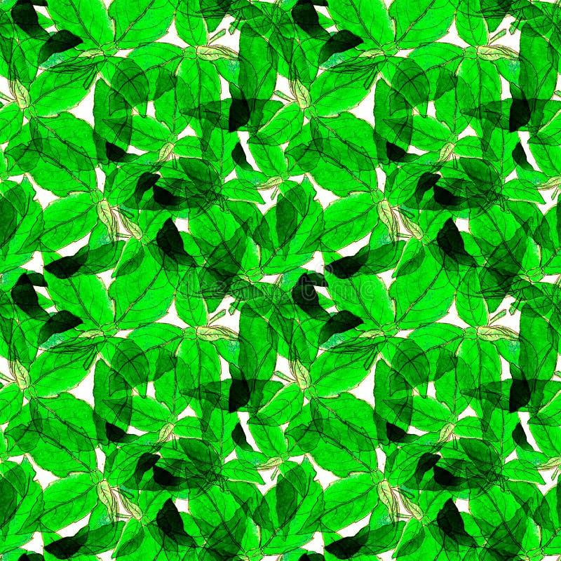 Basil Leafs Seamless Pattern Gezeichneter Hintergrund Repeatably Hand mit Gewürz-Kraut und Basilikum lizenzfreie stockfotografie