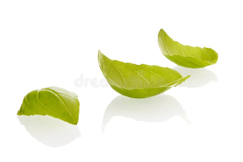 Basil leafs on white. royalty free stock photo