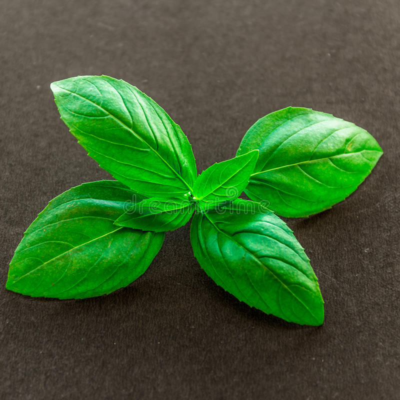 Basil Leaves immagini stock