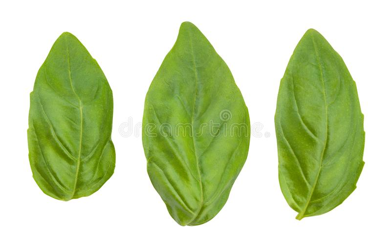 Basil leaves. Path isolated on white stock photography