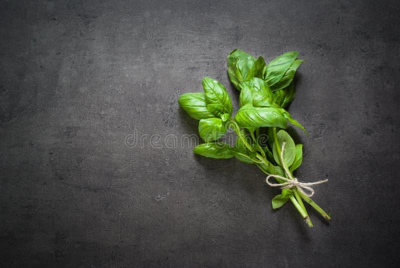 Basil leaves at dark. stock photography