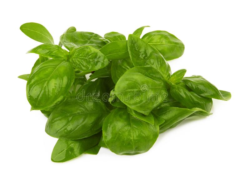 Basil leaves isolated stock images