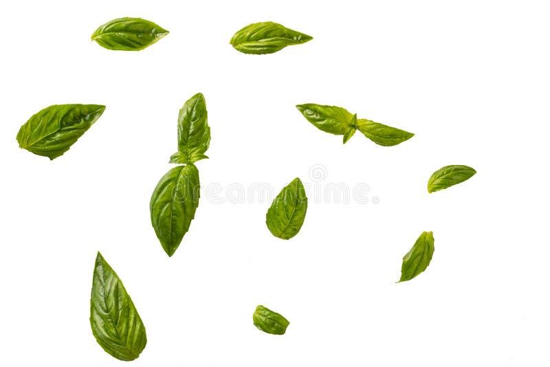 Basil leaves isolated on white background stock image