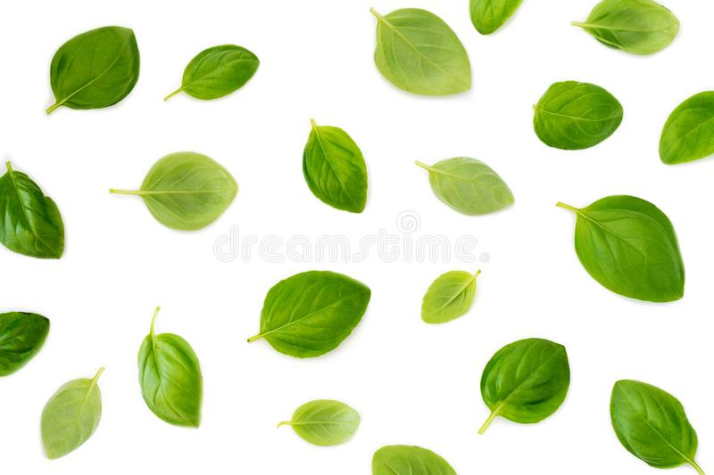 Basil leaves isolated on white background. Top view. Flat lay. C royalty free stock photography