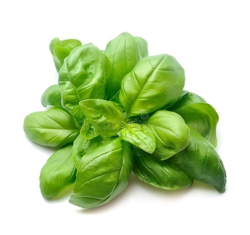 Basil leaves . Basil leaves isolated on white backgrounds royalty free stock image