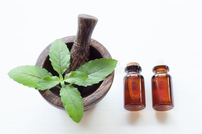 Basil Leaves santo in mortaio di legno e Basil Essential Oil santo immagine stock