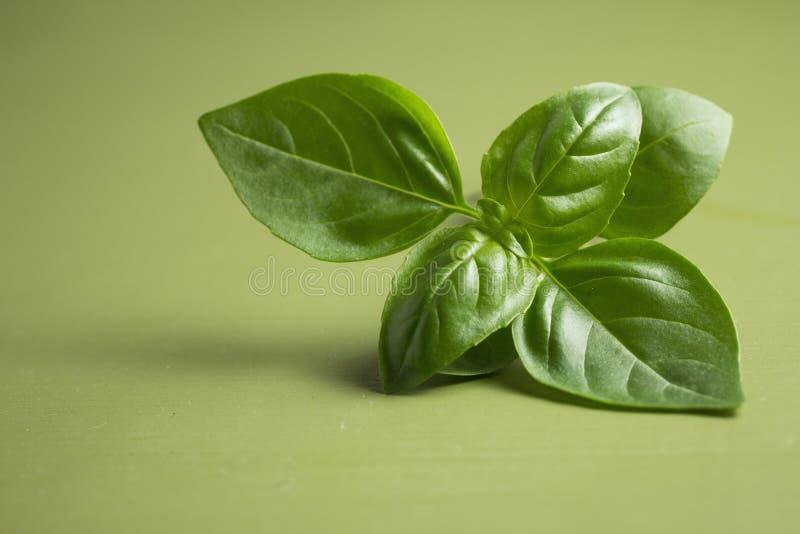 Basil Plant stockbild