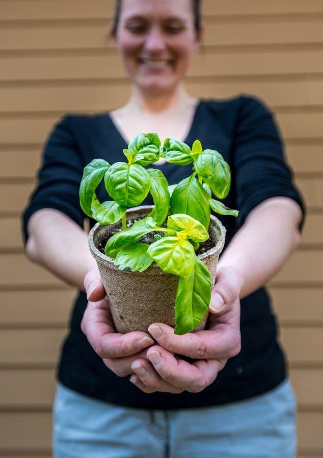 Basil Plant in Nadruk als Vrouwenaanbiedingen aan Camera royalty-vrije stock afbeelding