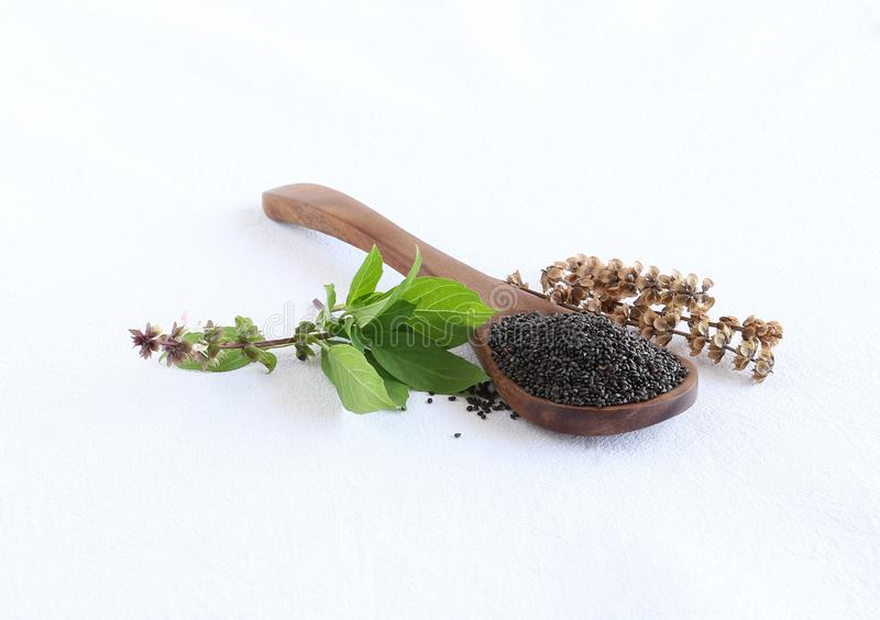 Basil Seeds en una cuchara de madera y hojas y tallo seco fotografía de archivo