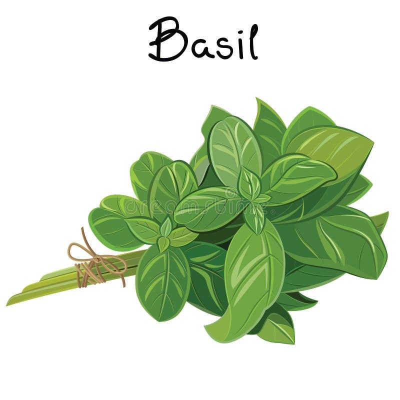 Basil Sprig ilustração royalty free