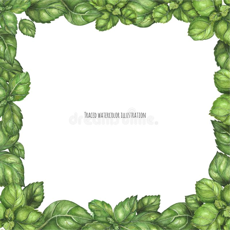 Basil Square Frame verde fresco ilustração stock