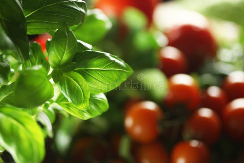 Basil and tomatos. Healthy fresh vegetables theme, basil, tomatos royalty free stock images